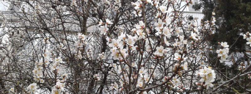 Февраль 2016 в Севастополе! Крым уже цветет!