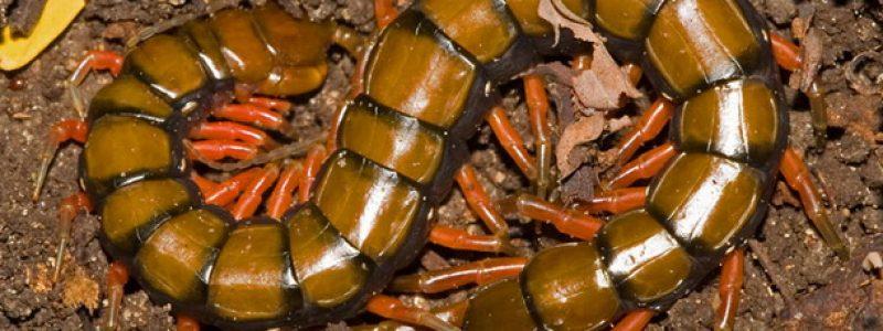Опасности в Крыму: растения, морские животные, насекомые, змеи